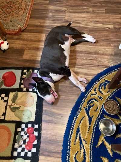 The Cool Kitchen Floor