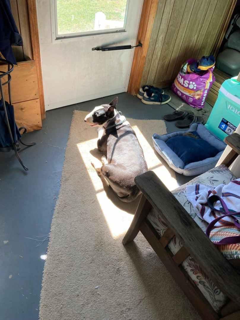 Murphy in the Sun